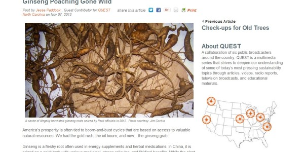Ginseng Poaching Gone Wild
