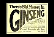 GinsengCulture.1jpg